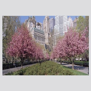 Cherry Trees Battery Park New York City NY