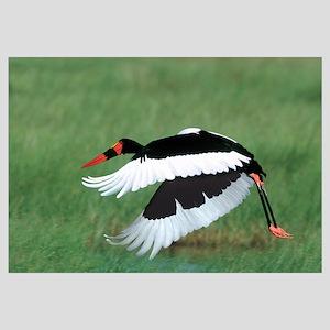 Saddle Bill Stork Tanzania Africa