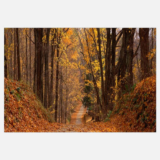Forest Road Pittsfield MA