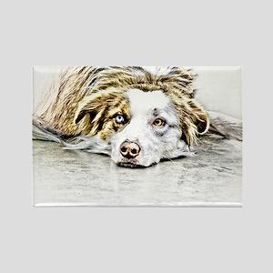 AUSTRALIAN SHEPHERD - DOG Rectangle Magnet