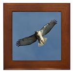 Juvenile Red-tailed Hawk Framed Tile