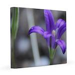 Blue-Eyed Grass Flower 12x12 Canvas Print