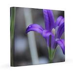Blue-Eyed Grass Flower 8x8 Canvas Print