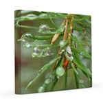 Water Droplets On Fir 8x8 Canvas Print