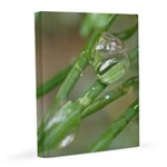 Water Droplet 16x20 Canvas Print