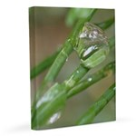 Water Droplet 11x14 Canvas Print