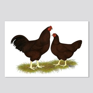 Buckeye Chickens Postcards (Package of 8)