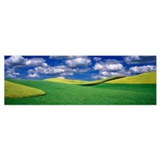 Clouds over a canola field, Palouse, Washington St Poster
