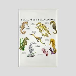 Seahorses & Seadragons Rectangle Magnet