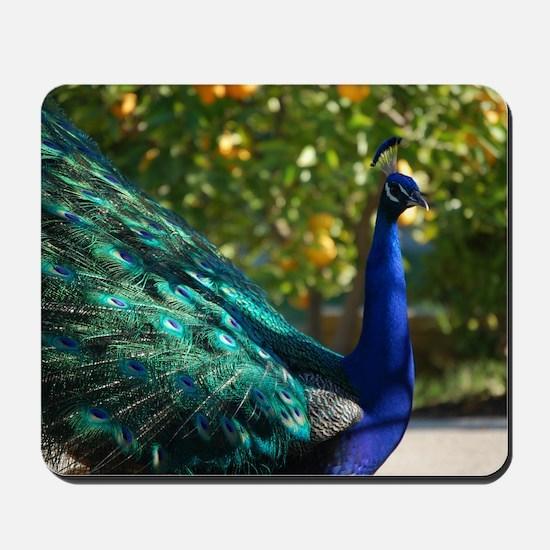 Peacock 5560 - Mousepad