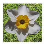 Daffodil Tile Coaster