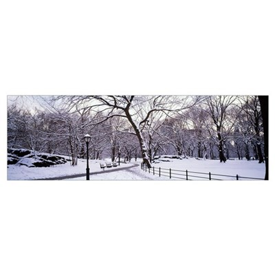 Bare trees during winter in a park, Central Park, Framed Print