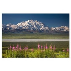 Mt. McKinley and the Alaska Range with fireweed fl Poster