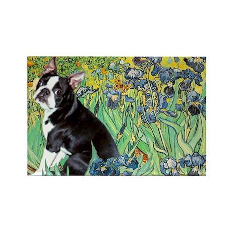 Irises & Boston Terrier Rectangle Magnet (10 pack)