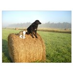 Cat and Dog on Hay Bale Wall Art