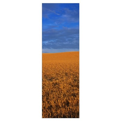 Clouds Over a Wheat Field Framed Print