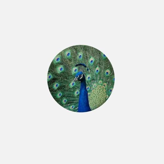 Peacock 5428 - Mini Button
