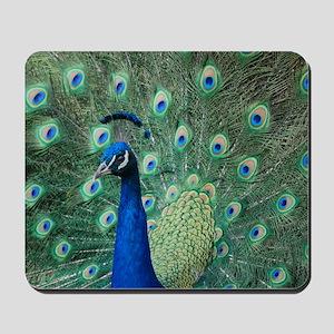 Peacock 5428 - Mousepad