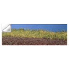 Reeds along a lake, California Wall Decal