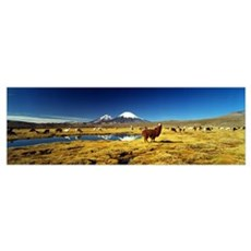Alpacas and Llamas Andes Chile Poster