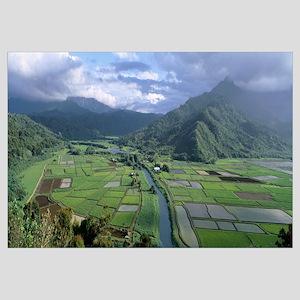Rice Fields Hanalei Valley Kauai HI
