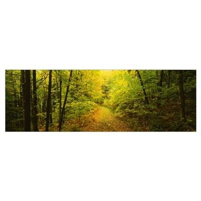 Dirt road passing through a forest, Vermont Poster