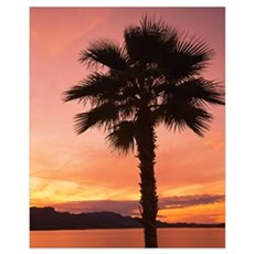 Silhouette of a palm tree, Havasu Lake, Havasu Cit Canvas Art