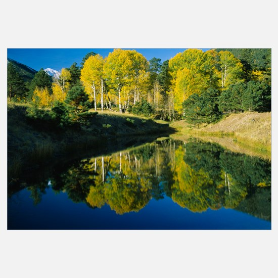 Reflection of American Aspen trees in a pond, Lock