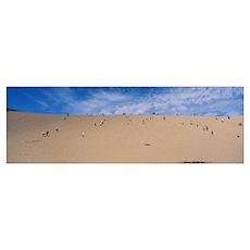 Tourists climbing a sand dune, Sleeping Bear Dunes Poster