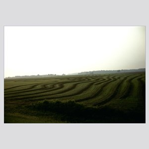 Panoramic view of a rice field, Arkansas