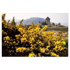 Wildflowers in bloom, distant Eilean Donan Castle, Poster
