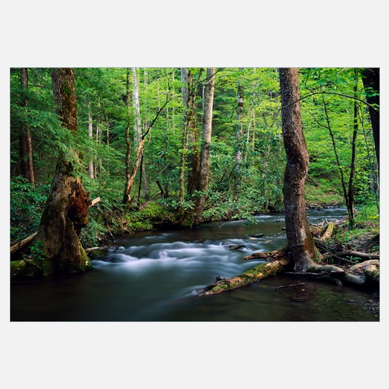 Rushing stream through dense forest, Great Smoky M