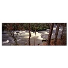 Stream flowing through a forest, Appalachian Mount Poster