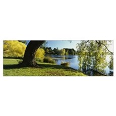 Willow tree by a lake, Green Lake, Seattle, Washin Framed Print