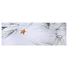 Starfish Beach AL Poster