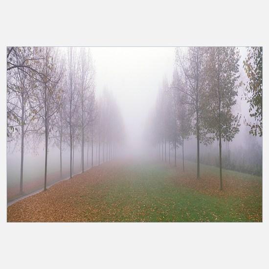 Trees in Fog Schleissheim Germany
