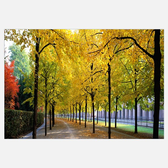 Pathway with Trees Karlsruhe Germany
