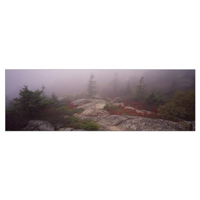 Trees covered with fog, Cadillac Mountain, Acadia Canvas Art