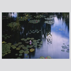 Water lilies in a pond, Denver Botanic Gardens, De