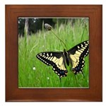 Anise Swallowtail Butterfly Framed Tile