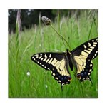 Anise Swallowtail Butterfly Tile Coaster