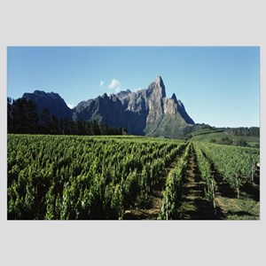 Vineyard with Groot Drakenstein mountains in the b