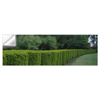 Hedge in a park Colt State Park Bristol Rhode Isla Wall Decal