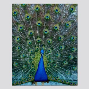 Peacock 6025 - Small Poster