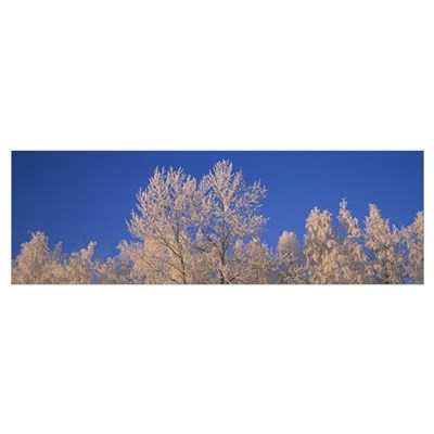 Winter Trees With Frost AK Poster