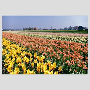 Field of Flowers Egmond Netherlands