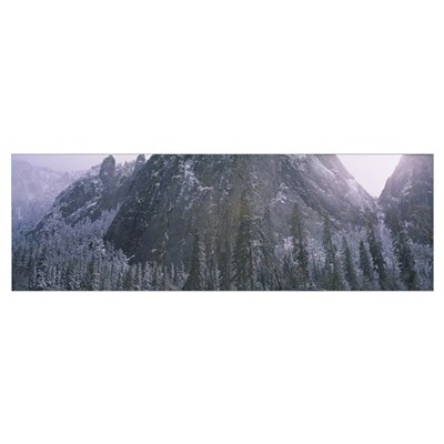Snow covered trees in a forest, Yosemite Valley, C Poster
