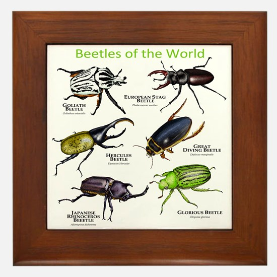 Beetles of the World Framed Tile
