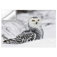 Snowy owl in snow, Michigan Wall Decal