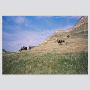Wild horses in a grassy field, Badlands, Theodore